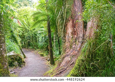 Native tropical forest in Paparoa National Park on the west coast of the South Island of New Zealand. - stock photo