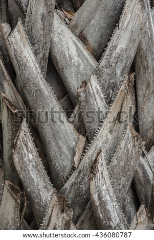 natural abstract texture background of close up sugar palm bark