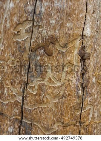 manny farber termite art pdf