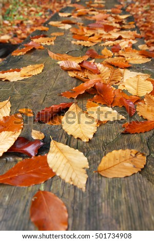 Natural autumn background: wet fallen orange leaves on old weathered wood at rainy weather. Shallow DOF.