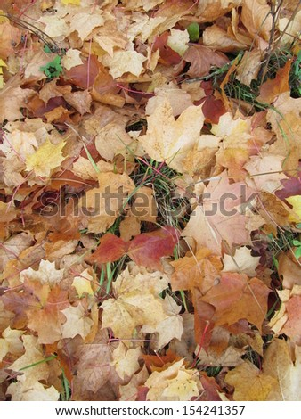 Natural background - fallen leaves lie on the ground
