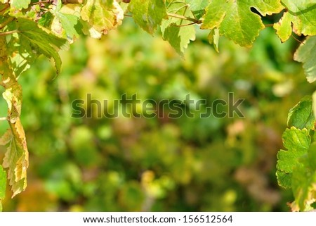 Natural background framed by vine leaves - stock photo