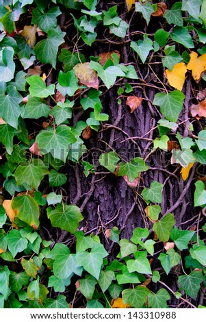 Natural background from tree bark and leaves