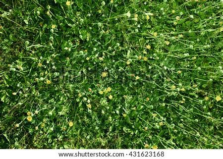 Natural background - green grass texture. Green Grass Background Texture.Green grass cover as background. - stock photo