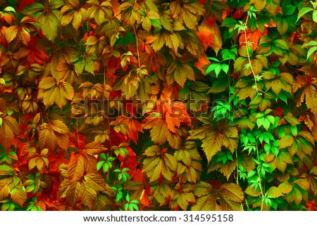 Natural background: leaves of bright colors - stock photo