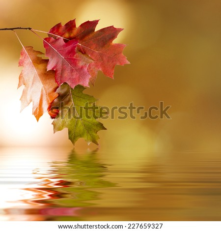 natural background of autumn leaves, natural backgrounds