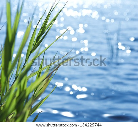 Natural background of green reeds against sparkling water - stock photo