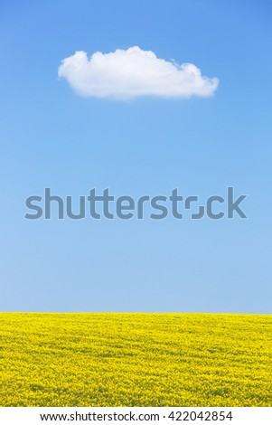 Natural background of rapeseed field against blue sky with a white cloud. Textured horizon background, solitude, agriculture and pure nature concept. Copy space.  - stock photo
