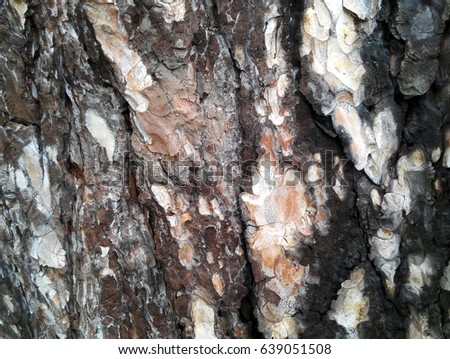 Natural background: texture of pine tree bark