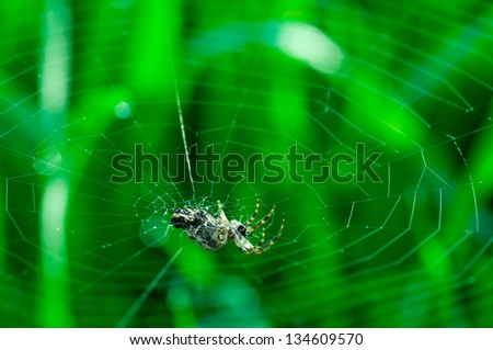 Natural background with a spider