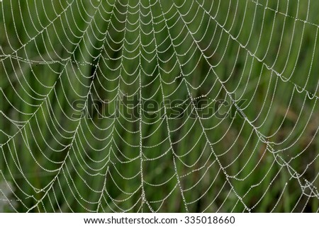 Natural background with a spider web and drops. Spider net with water drops. - stock photo