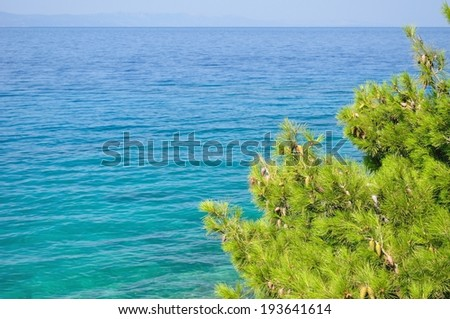 Natural background with adriatic sea and tree. Space on left side - stock photo