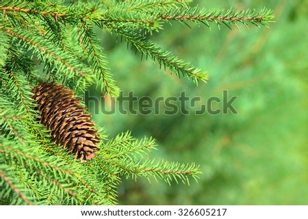 Natural background with fir-tree branches and the cone