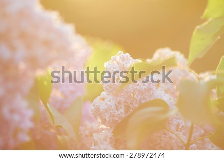 natural background with flowers - stock photo