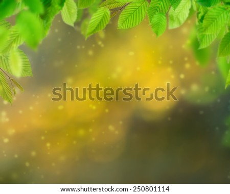 Natural background with leaves ready for your product or text.