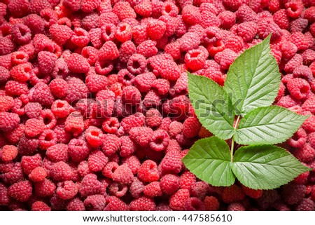 natural background with raspberry and green leaf - stock photo
