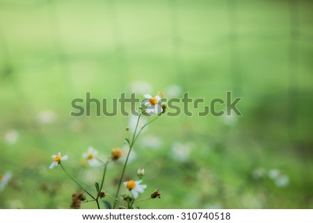 natural backgrounds with flowers - stock photo