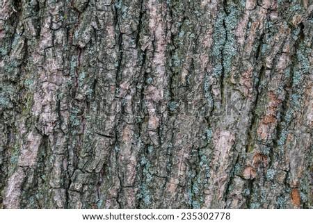 natural bark background - stock photo