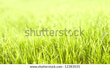 Natural beautiful green grass with shallow DOF and nice bokeh lit by bright sun