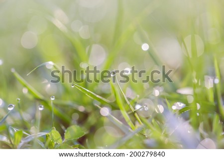 Natural beautiful green grass with shallow DOF and nice bokeh lit by bright sun - stock photo