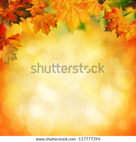 Natural beauty. Autumnal abstract backgrounds for your design - stock photo