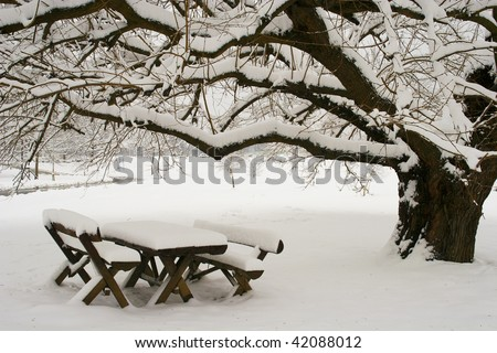 natural beauty covered with snow