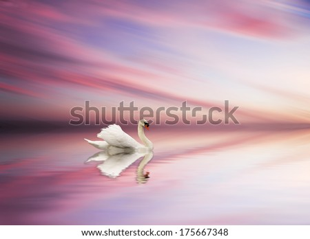 natural beauty in the water - stock photo