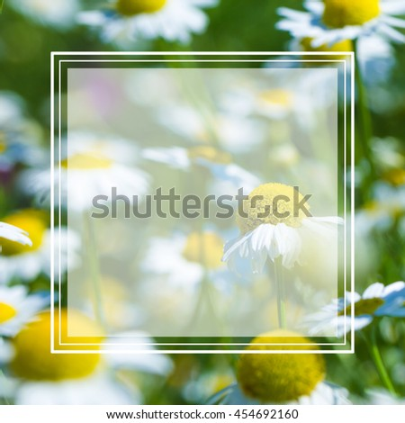Natural blur green background chamomile field. Selective focus. shallow depth of field. text box - stock photo