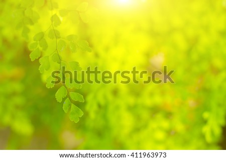 Natural blurred green background, the bokeh effect
