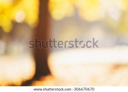 natural bokeh with autumn trees, good for background - stock photo
