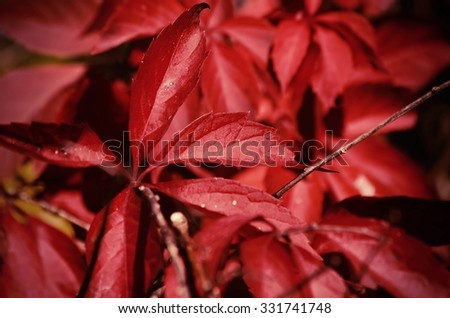 Natural Bright Leaf Autumn Background - stock photo