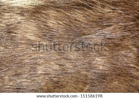 Natural brown fur texture, as background - stock photo