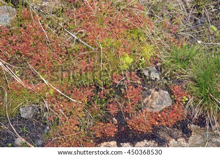 Natural carpet of moss on a forest floor - stock photo