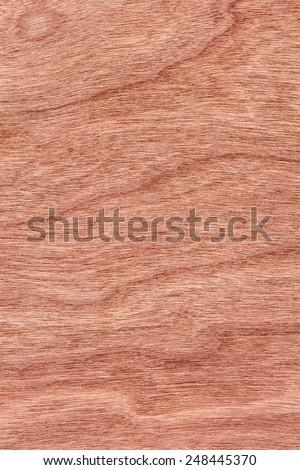Natural Cherry Wood Brownish Red Veneer, grunge texture sample. - stock photo