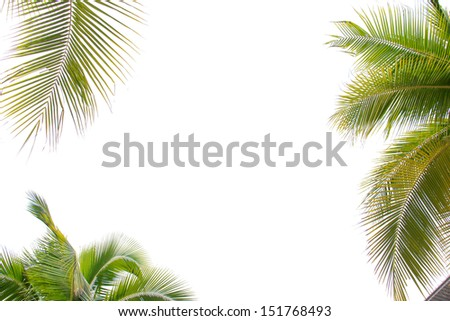 Natural coconut leaves