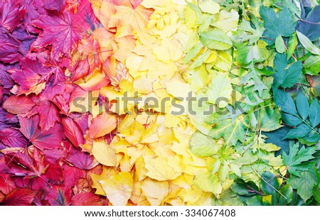 Natural color palette made of autumn leaves arranged in rainbow order - stock photo