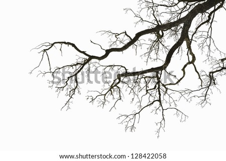 Natural color silhouette of a leafless tree against an overcast sky. - stock photo