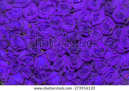 Natural  colorful roses background - stock photo