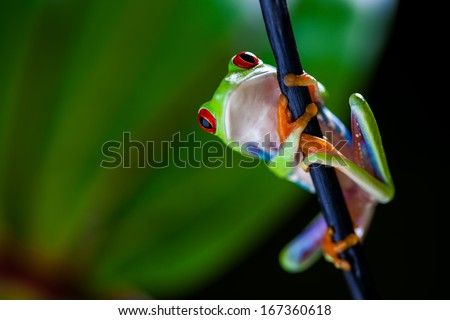 Natural concept with beautiful frog in the jungle - stock photo