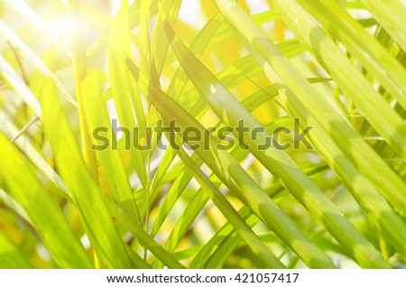 Natural defocused and depth of field (DOF) effect of palm leaf, the bokeh effect