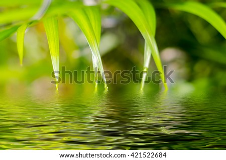 Natural defocused and depth of field (DOF) effect of palm leaf, the bokeh effect, morning sunlight and water reflection