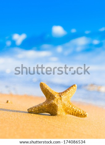 Natural Details On a Beach