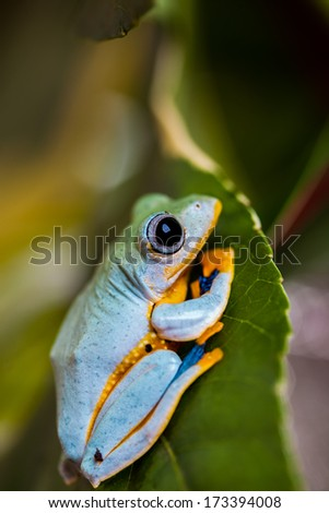 Natural environment with exotic frog