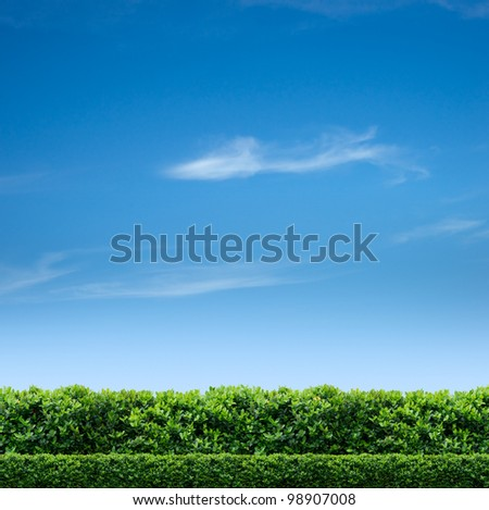 Natural fence and blue sky - stock photo