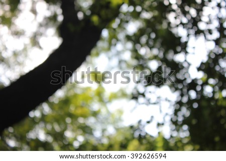 natural flora with bokeh background - stock photo