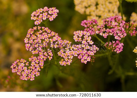 Natural flowers bunch spring flowers nature stock photo royalty natural flowers bunch spring flowers in nature tiny flowers from canada prairie flowers mightylinksfo