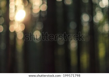 Natural forest blurred background - stock photo