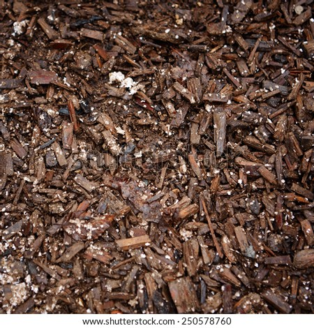 Natural Forest Mulch - stock photo
