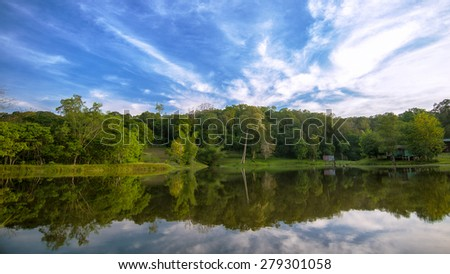 Natural forest with a bright sky