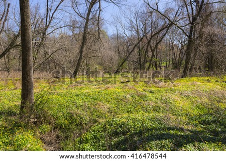 Natural forest with fresh floral bed. wild yellow flowers. Fallen trees. Springtime background - stock photo